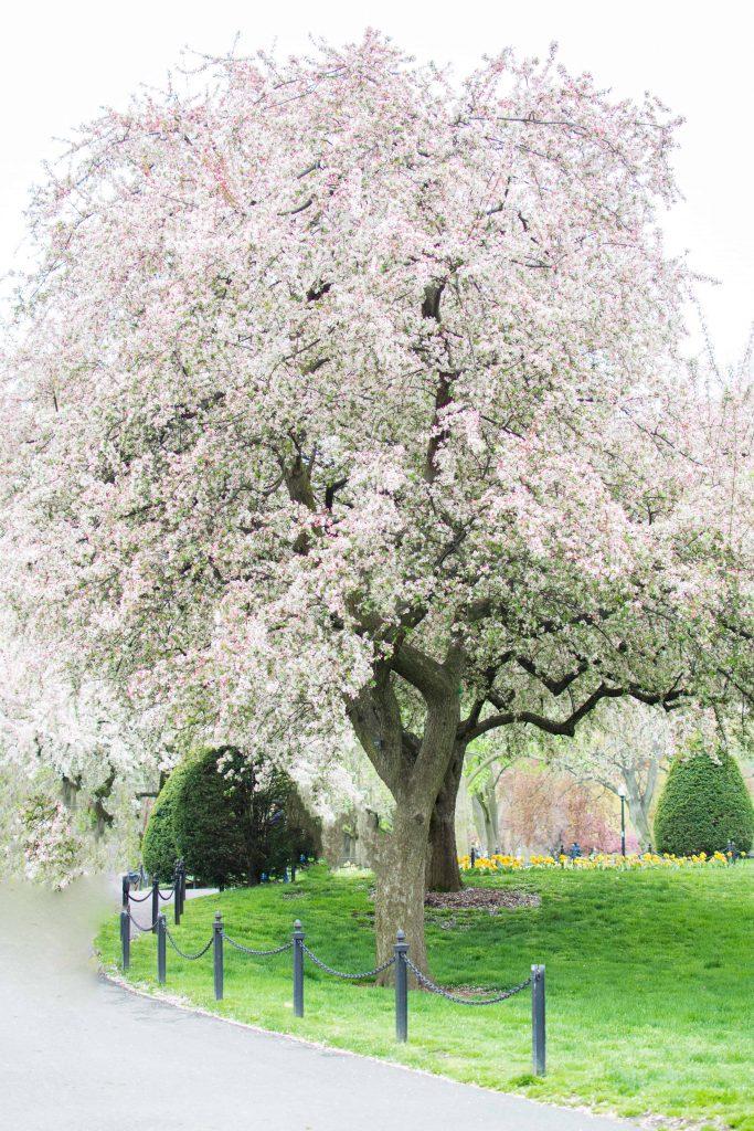 LovePlayingDressup-Neha-Gandhi-FloralDress-Boston-Spring-OOTD-Petite-Tulips-8
