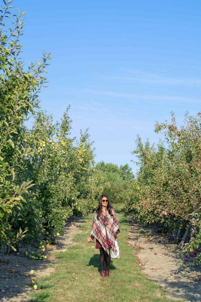 love_playing_dressup_jc_penny_apple_picking-9